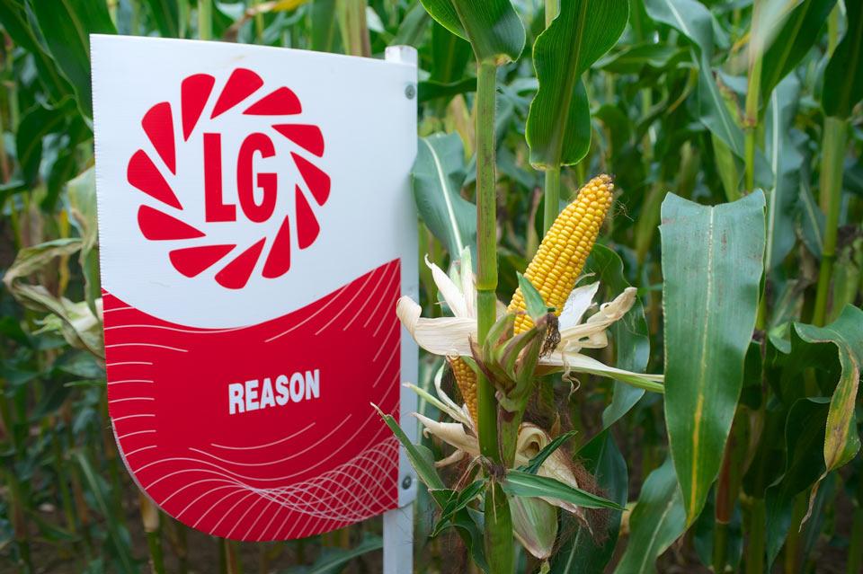 Reason Maize