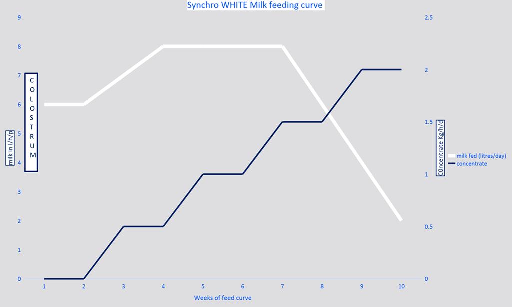 Britannia Synchro White Performance Metrics Chart